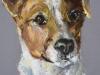 Pastel-Hond-Jack-Russel maat 20x15 cm te koop