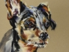 Pastel portret hond maat 30x23 cm