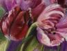 tulpen black Parrot, te koop via mijn blog